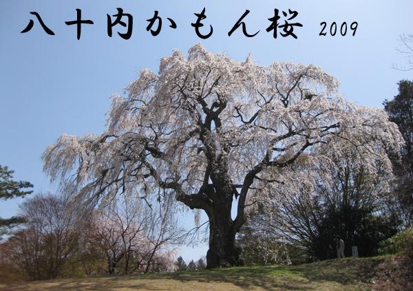 三春 八十内かもん桜  今回は2009年に訪れた三春町内にある八十内かもん桜を紹介します。三春.